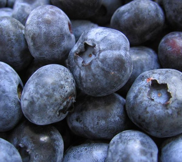 Blueberries - Gold Traube (Potted)